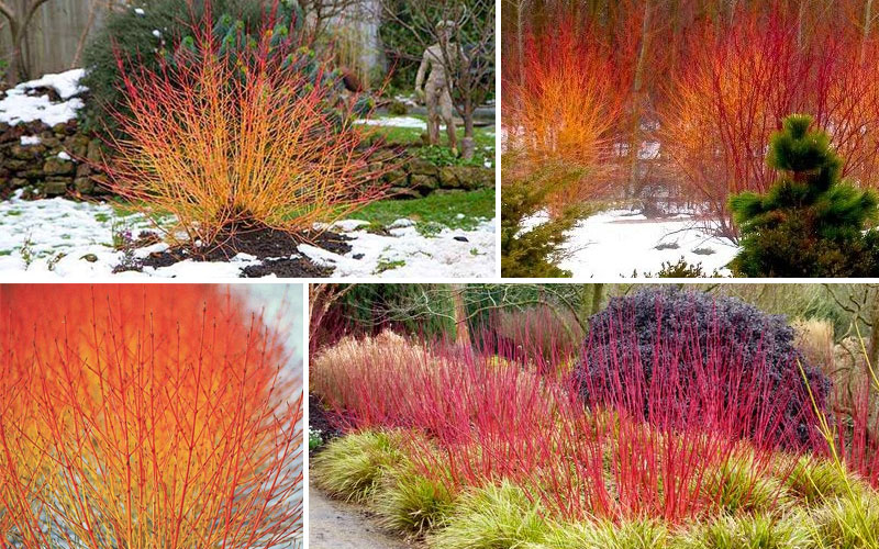 5 Wonderful Winter Plants to Brighten Up Your Garden