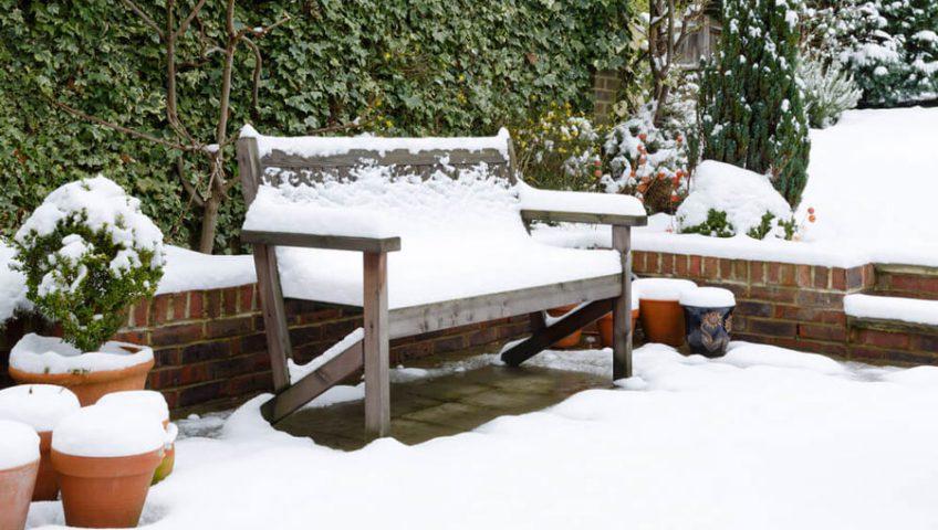 5 Wonderful Winter Plants to Brighten Up Your Garden
