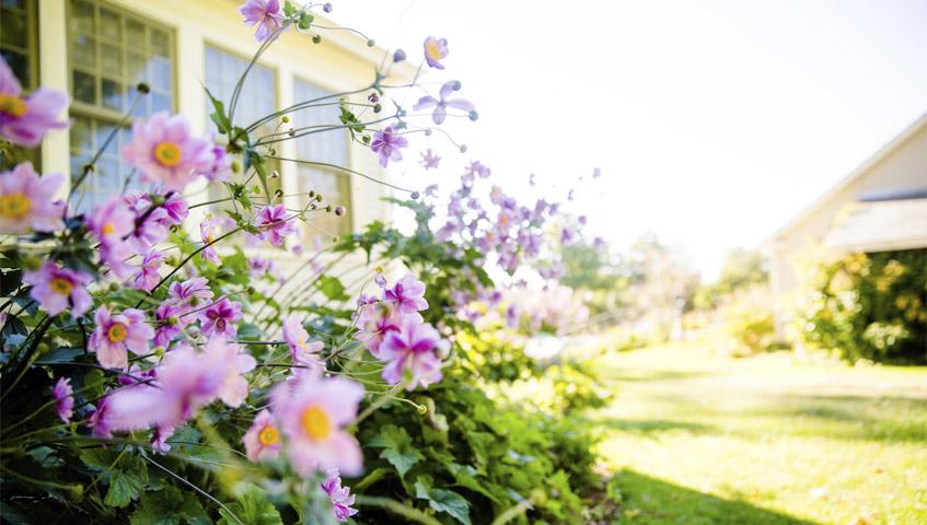 Garden spring-summer