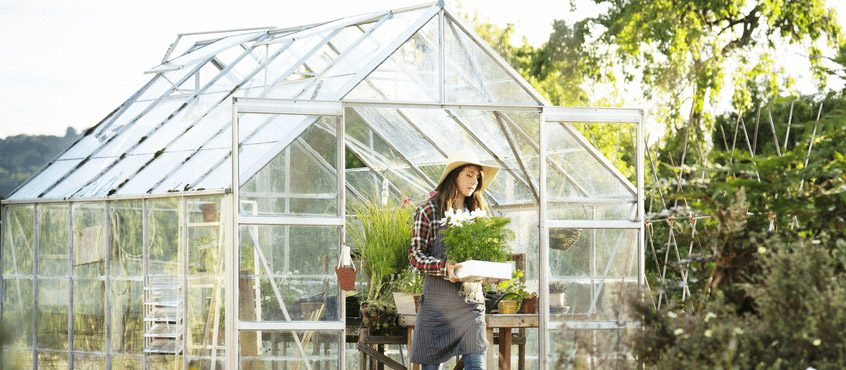 How to vent a Greenhouse
