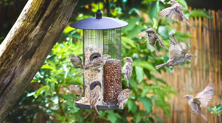 Bird Feeder Green Frame Feeder Seed Feeder