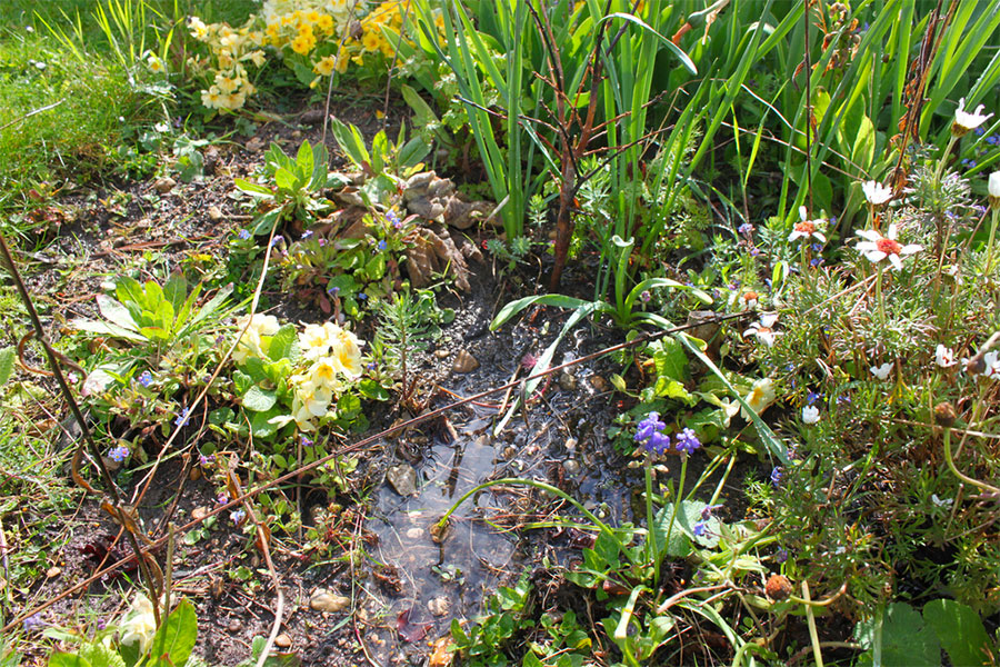 The telltale signs of a waterlogged garden.