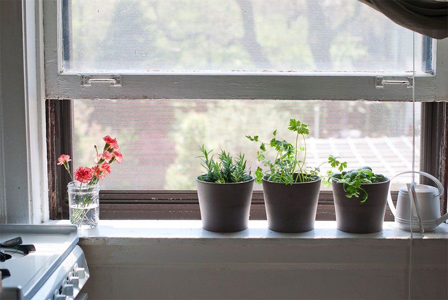 Make sure that your herbs have plenty of natural light