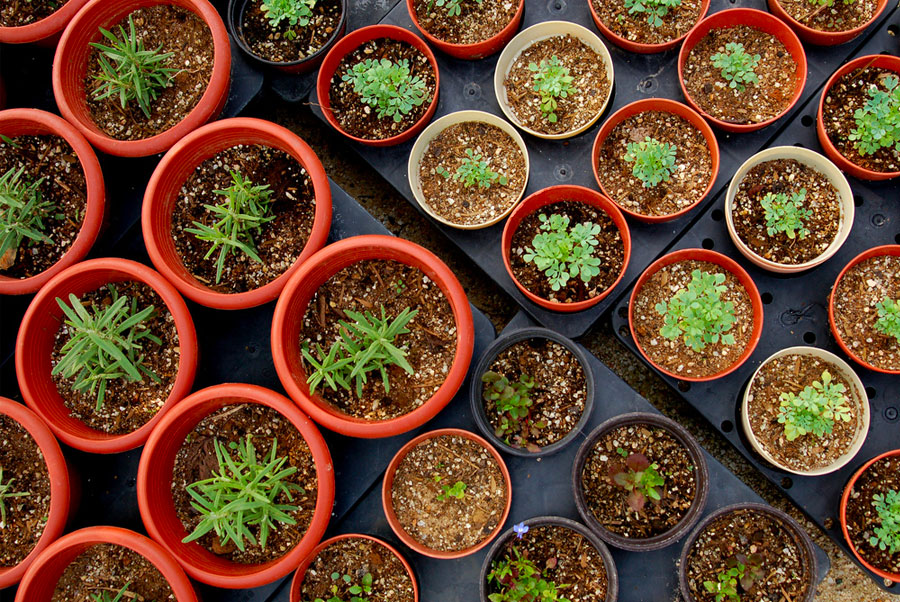 A soilless mix is a far healthier option for your indoor herbs