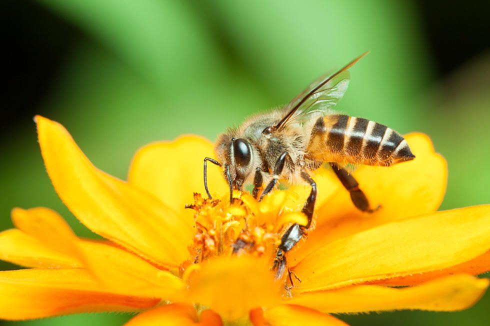 The role of bees and the prevention of bee population decline
