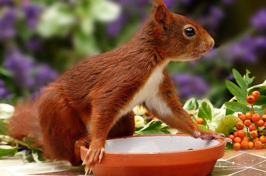 feeding-squirrel