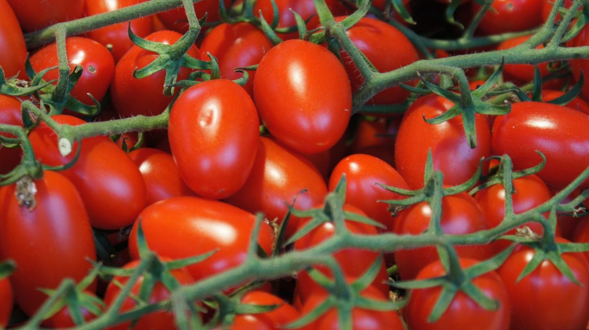 How to grow tomatoes all year round