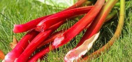rhubarb-ready-to-eat