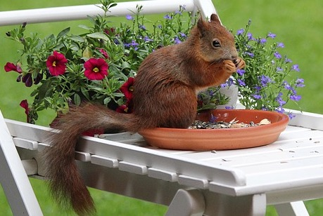 squirrel-feeding-in-garden
