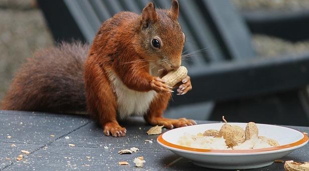 squirrel-in-garden