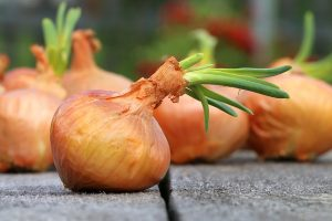 onion-growing