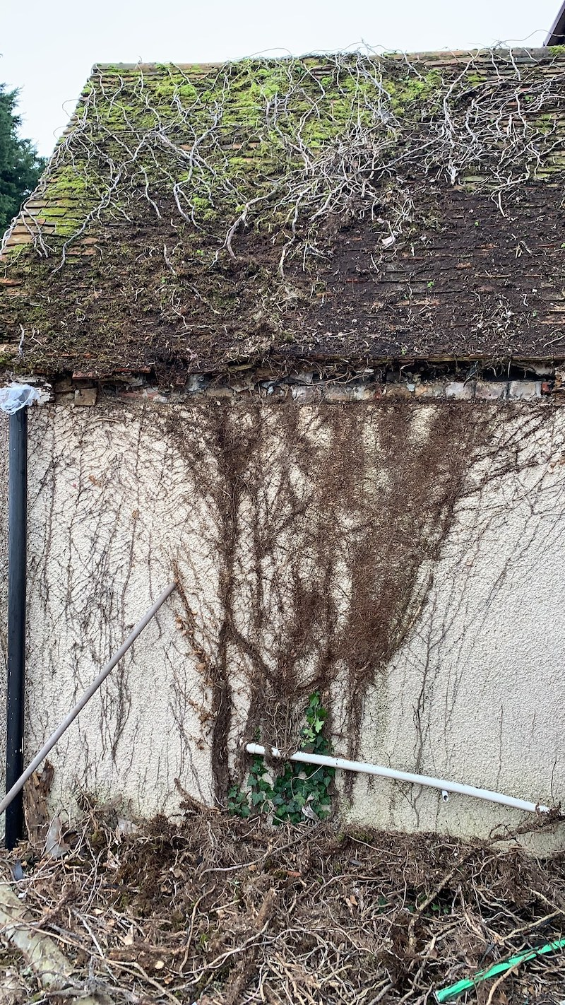 Learn how to remove Ivy from roofs and walls
