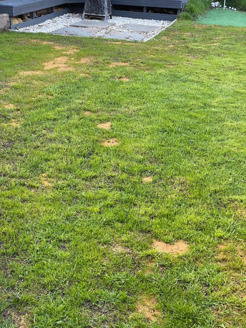 Learn how to level a lawn in the UK from scratch step by step