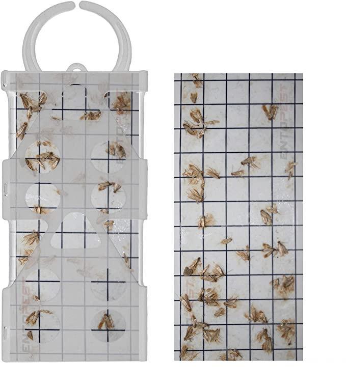 Entopest professional Common Clothes Moth Traps & 10 Pheromone Glue Guards